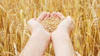 Grain Indemnity