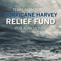 Texas Farm Bureau establishes Hurricane Harvey Relief Fund